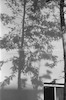 עץ, תל אביב – הספרייה הלאומית