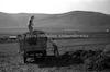 חלוצים מעמיסים זבל למשאית, קיבוץ תל-יוסף