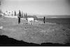 ערבי חורש שדה ליד הכנרת – הספרייה הלאומית