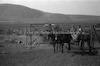 עגלה נכנסת לחצר, קיבוץ תל-יוסף