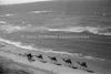 שיירת גמלים על שפת הים, תל אביב – הספרייה הלאומית