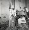 איש מבוגר אורז שקי תפוחי אדמה בחבל תענך.