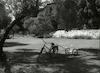 אופניים על הדשא בקיבוץ מעוז חיים.