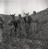 פרדות בגליל העליון סוחבות נשק עבור החיילים.