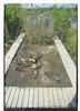 Jewish Cemetery in Stara Moravica Tombstone – הספרייה הלאומית