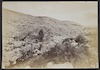 Jericho--Site of the Anicent City, Elisha's Fountain, Ain-es-Sultan – הספרייה הלאומית