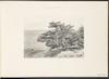 Cèdres du Liban -Cedars of Lebanon -La Palestine Illustrée IV: Collection de Vues Recueillies en Orient, Galilee et Liban – הספרייה הלאומית
