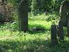 Jewish Cemetery in Nadvirna (Nadwórna), photos July 2010 – הספרייה הלאומית