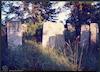 New Jewish cemetery in Brody – הספרייה הלאומית