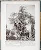 Oliviers du Jardin de Gethsemani -Olive trees from the Garden of Gethsemane -Terre-Sainte. Introduction by Abbé Eugène Bossard. Published by La Maison de la Bonne Press, Paris – הספרייה הלאומית