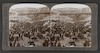 Cattle market day in the Lower Pool of Gihon, Valley of Hinnom, Jerusalem ( Isaiah xxii: 9): -Palestine Through the Stereoscope