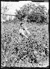"""משק הפועלות ת""""א 1936 – הספרייה הלאומית"""