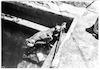 אילוף כלבים (גברת מנצל) מקוה ישראל – הספרייה הלאומית