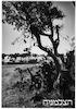 ראשון לציון בת ששים שנה 6/1942 – הספרייה הלאומית
