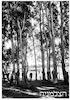11.1.39 זכרון יעקב עצים עתיקים – הספרייה הלאומית