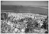 חיפה מבט מהכרמל – הספרייה הלאומית