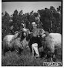 גבעת חיים רפורטג'ה כבשים – הספרייה הלאומית