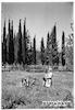 שריד 4/1947 ילדים ביער – הספרייה הלאומית