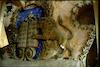 Great Synagogue in Slonim - Eastern wall and Torah ark Torah ark, upper part – הספרייה הלאומית