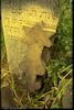 New Jewish cemetery in Teleneşti (Teleneshty) Tombstone of ? son of Naftali and a tombstone with Magen David – הספרייה הלאומית