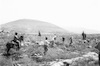 Arab workers from the occupied territories working in planting trees for the forest which is planed near Segera.