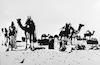 The Bedouins camel market near Beersheba.: