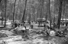 Children enjoying their summer vacation in the forest of Mishmar HaEmek – הספרייה הלאומית
