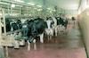 The milk industry at Kibbutz Geva – הספרייה הלאומית