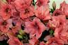 Flower Exhibition in Haifa – הספרייה הלאומית