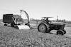 Harvesting in the Kibbutz Shfaim Kibbutz.: – הספרייה הלאומית