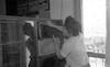 טיפול בכוורת בבית שטורמן – הספרייה הלאומית