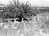 בית הקברות הישן של עין חרוד – הספרייה הלאומית