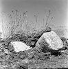 מימצאי ארכיאולוגיה – הספרייה הלאומית