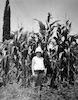 עבודה חקלאית בשדה – הספרייה הלאומית