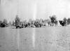שיירת גמלים חונה במדבר 1915 – הספרייה הלאומית
