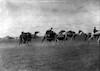 גמלים ליד תל א-שריעה (מצפון לבאר שבע) במקום הייתה תחנת רכבת – הספרייה הלאומית