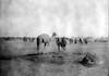 גמלים במחנה ליד באר שבע 1915. (א. הוסמאן, עם סרט על הזרוע) – הספרייה הלאומית