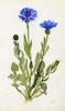 דף ציור פרח – הספרייה הלאומית