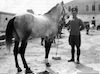 יוסף (גרושובסקי) גורי עם סוס – הספרייה הלאומית