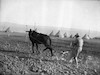 חריש סוסים – הספרייה הלאומית