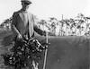 כהנוביץ בפרדס שפיה מודד את גובה חול שנערם בפרדס לאחר סופה שנת 1934 – הספרייה הלאומית