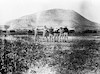 טיול מחזור יג' מקוה ישראל 1933 ליד הר תבור – הספרייה הלאומית