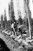 פרדס שפיה השקיה בהצפה 1934 – הספרייה הלאומית