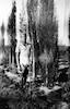 עמרם בהשקיית הברושים בפרדס שפיה בפרדס חנה 1934 – הספרייה הלאומית
