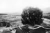 אפריל 1936, חורבות הכפר דלהמיה ליד אשדות יעקב – הספרייה הלאומית