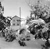 שלג בבית חולים העמק – הספרייה הלאומית