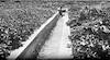 רפרודוקציה לתצלום משנות העשרים, ניקוז בעמק – הספרייה הלאומית
