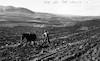 רפרודוקציה לתצלום משנות העשרים, חריש בגבעות מעל בית השיטה 38 – הספרייה הלאומית