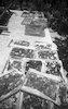 ייבש צימוקים חוות עדן – הספרייה הלאומית