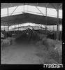 כתבה - רסקו, חוות בקר – הספרייה הלאומית